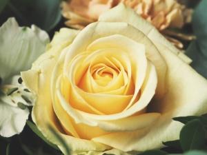 anastasia-rose